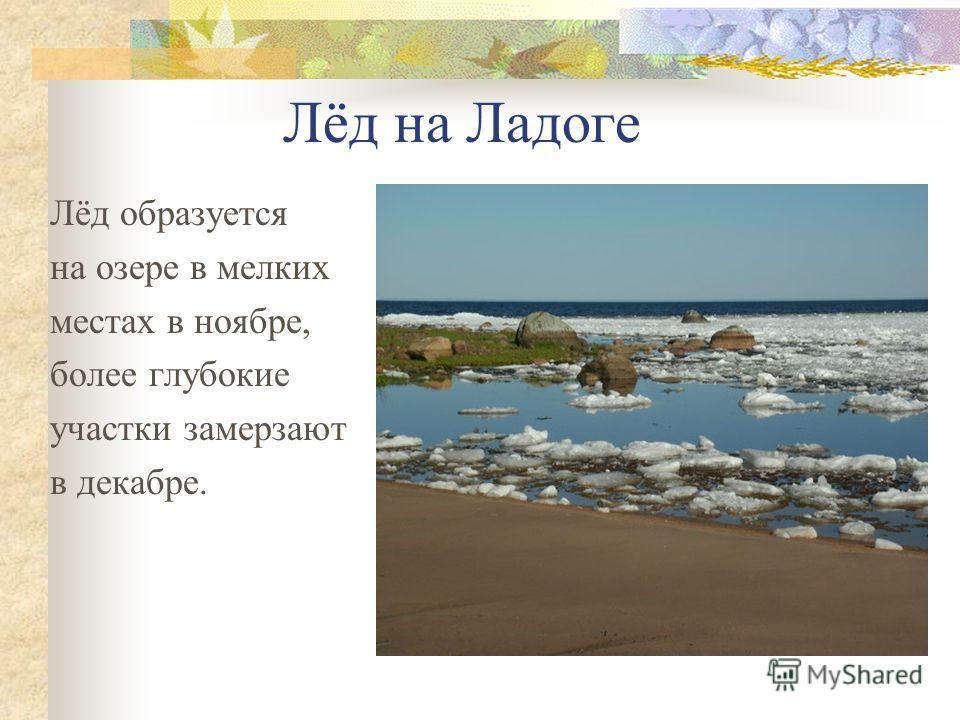 Лёд на Ладоге Лёд образуется на озере в мелких местах в ноябре, более глубокие участки замерзают в декабре.