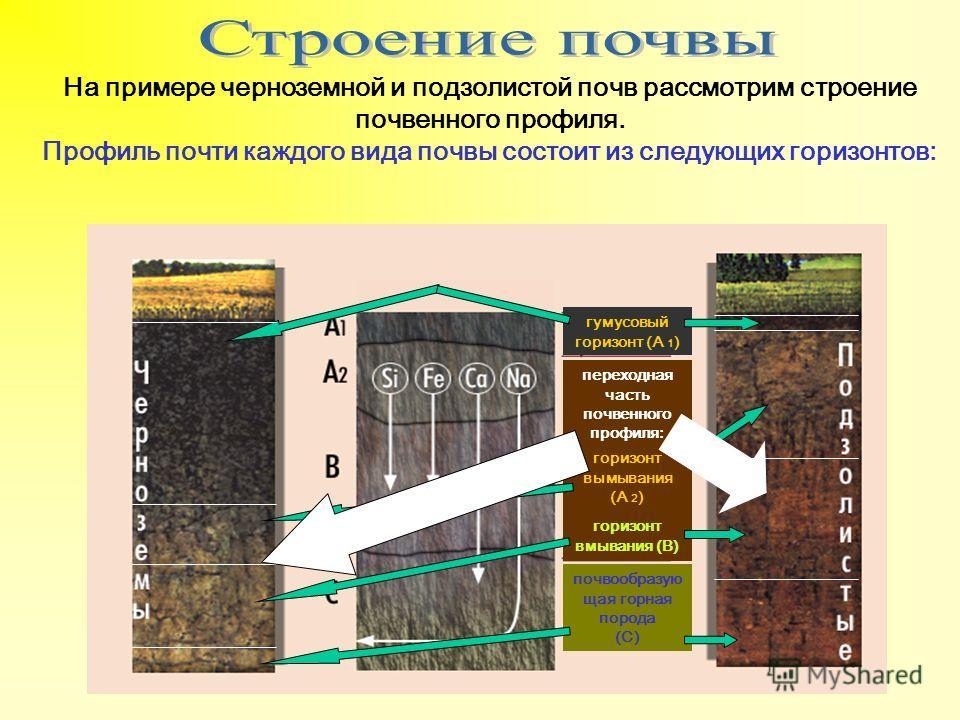 На примере черноземной и подзолистой почв рассмотрим строение почвенного профиля. Профиль почти каждого вида почвы состоит из следующих горизонтов: гумусовый горизонт (А 1 ) переходная часть почвенного профиля: почвообразую щая горная порода (С) гори