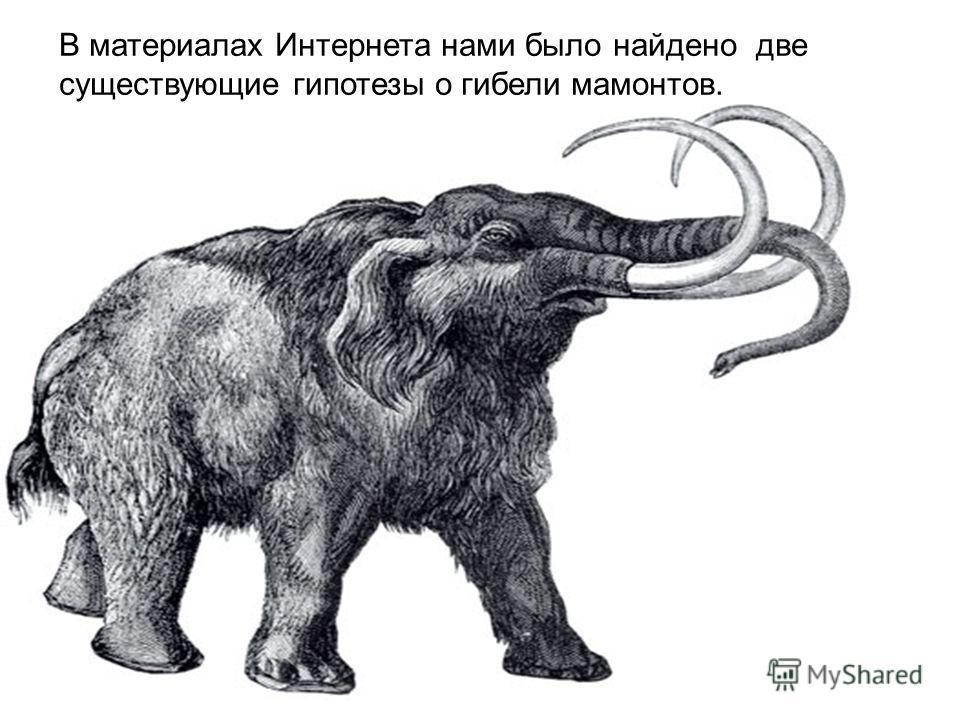 В материалах Интернета нами было найдено две существующие гипотезы о гибели мамонтов.