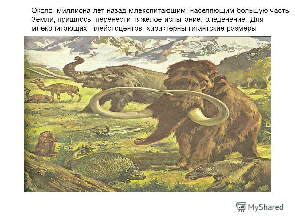 Около миллиона лет назад млекопитающим, населяющим большую часть Земли, пришлось перенести тяжёлое испытание: оледенение. Для млекопитающих плейстоцентов характерны гигантские размеры
