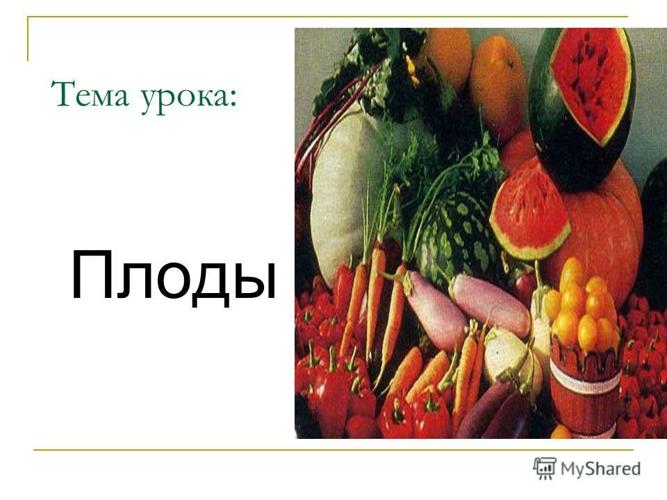 Тема урока: Плоды