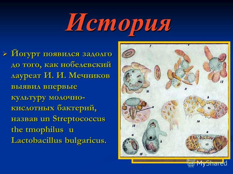 История Йогурт появился задолго до того, как нобелевский лауреат И. И. Мечников выявил впервые культуру молочно- кислотных бактерий, назвав un Streptococcus the tmophilus u Lactobacillus bulgaricus.