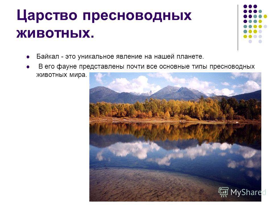 Царство пресноводных животных. Байкал - это уникальное явление на нашей планете. В его фауне представлены почти все основные типы пресноводных животных мира.