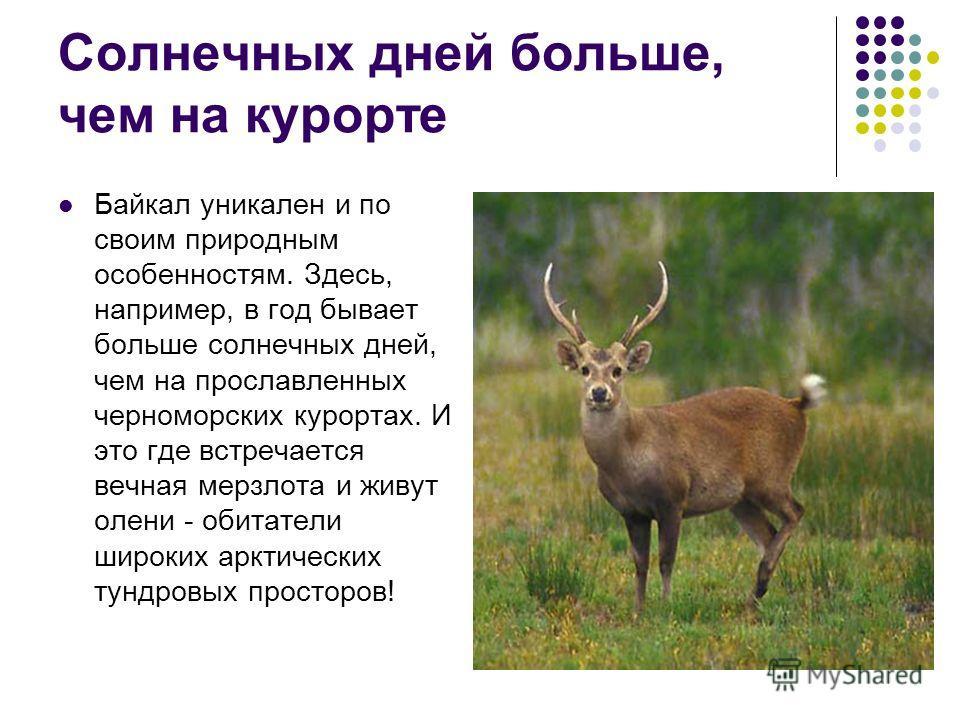 Солнечных дней больше, чем на курорте Байкал уникален и по своим природным особенностям. Здесь, например, в год бывает больше солнечных дней, чем на прославленных черноморских курортах. И это где встречается вечная мерзлота и живут олени - обитатели