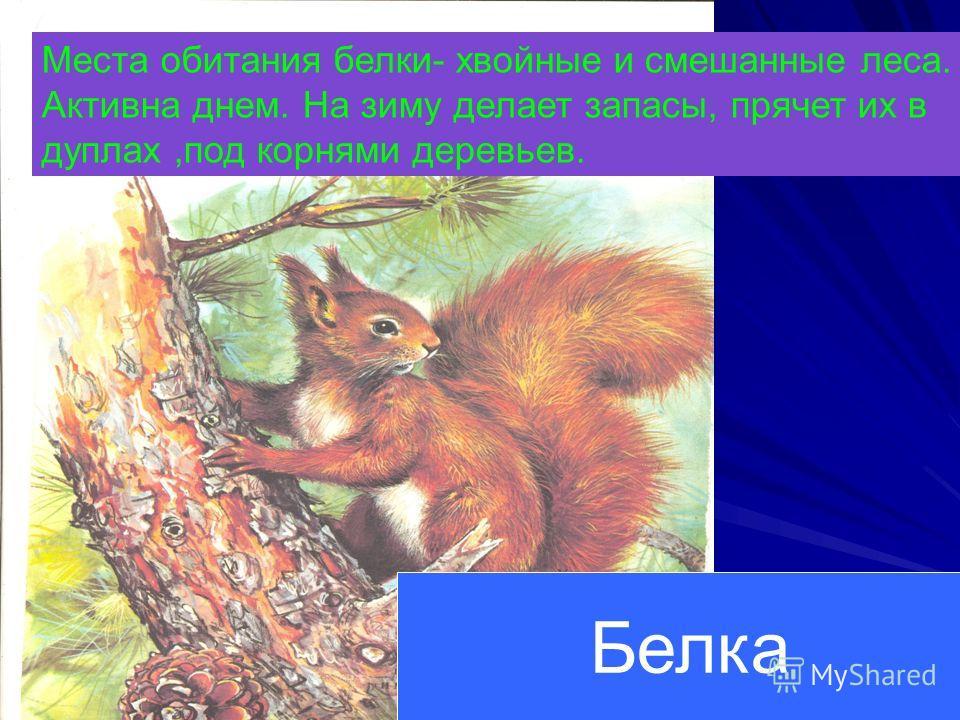 Нянька в медвежьем семействе своя – один из старших медвежат. Таких нянек зовут пестунами.