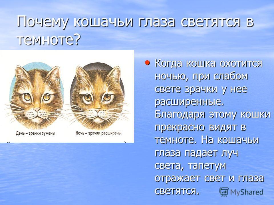 Почему кошачьи глаза светятся в темноте? Когда кошка охотится ночью, при слабом свете зрачки у нее расширенные. Благодаря этому кошки прекрасно видят в темноте. На кошачьи глаза падает луч света, тапетум отражает свет и глаза светятся.