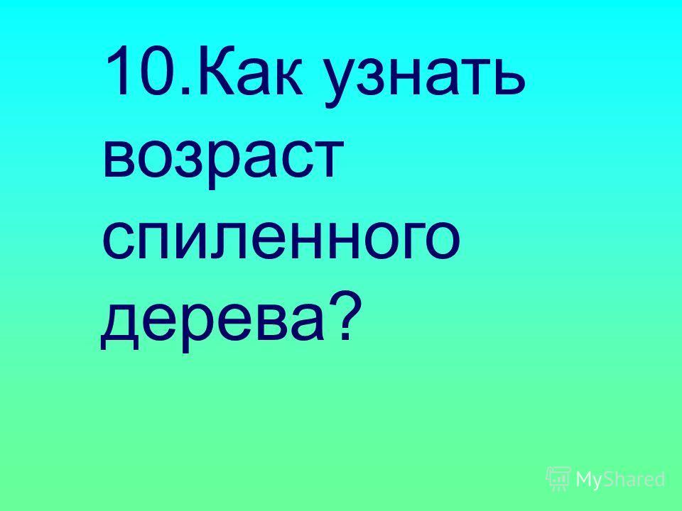 10.Как узнать возраст спиленного дерева?