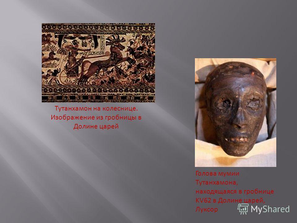 Тутанхамон на колеснице. Изображение из гробницы в Долине царей Голова мумии Тутанхамона, находящаяся в гробнице KV62 в Долине царей, Луксор