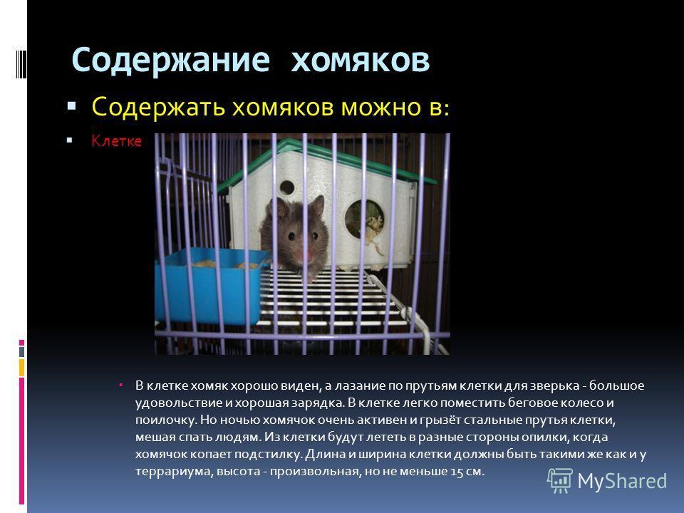 Содержание хомяков Содержать хомяков можно в: Клетке В клетке хомяк хорошо виден, а лазание по прутьям клетки для зверька - большое удовольствие и хорошая зарядка. В клетке легко поместить беговое колесо и поилочку. Но ночью хомячок очень активен и г