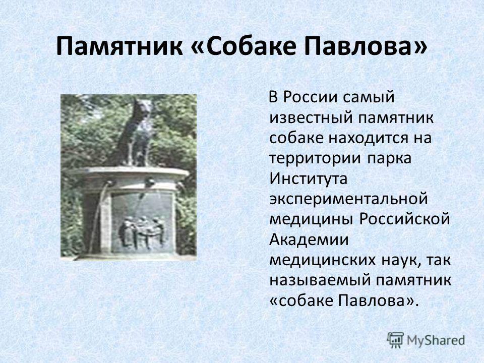 Памятник «Собаке Павлова» В России самый известный памятник собаке находится на территории парка Института экспериментальной медицины Российской Академии медицинских наук, так называемый памятник «собаке Павлова».