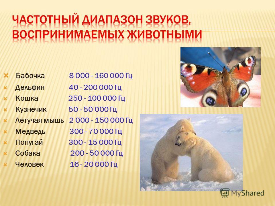 Бабочка 8 000 - 160 000 Гц Дельфин 40 - 200 000 Гц Кошка 250 - 100 000 Гц Кузнечик 50 - 50 000 Гц Летучая мышь 2 000 - 150 000 Гц Медведь 300 - 70 000 Гц Попугай 300 - 15 000 Гц Собака 200 - 50 000 Гц Человек 16 - 20 000 Гц