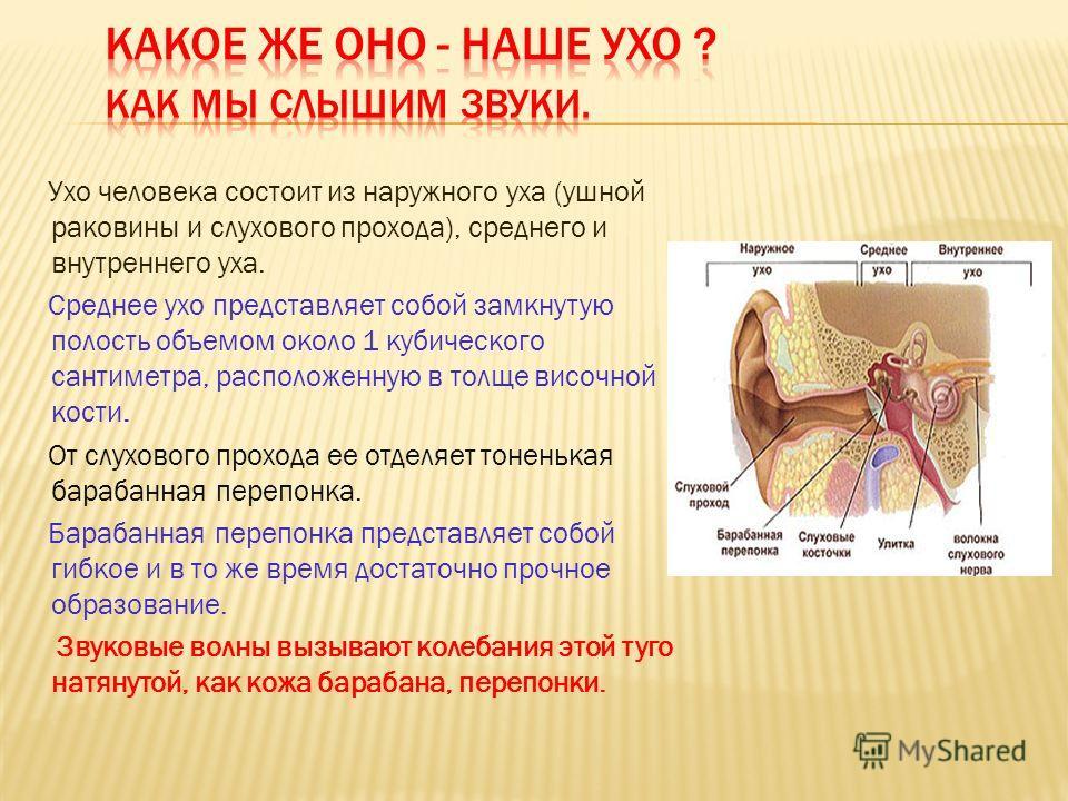 Ухо человека состоит из наружного уха (ушной раковины и слухового прохода), среднего и внутреннего уха. Среднее ухо представляет собой замкнутую полость объемом около 1 кубического сантиметра, расположенную в толще височной кости. От слухового проход