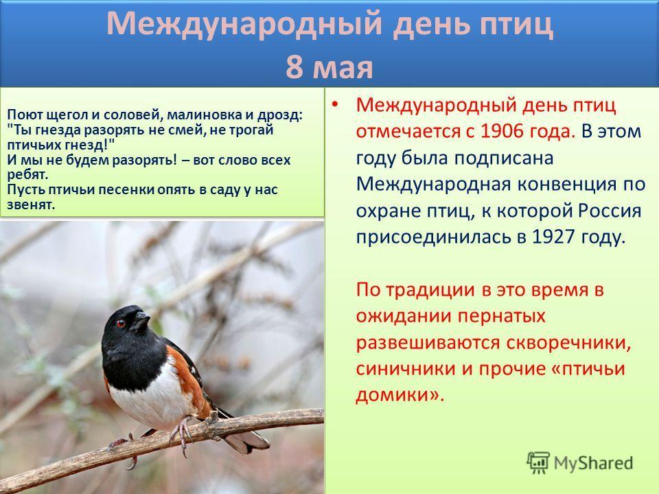Международный день птиц 8 мая Международный день птиц отмечается с 1906 года. В этом году была подписана Международная конвенция по охране птиц, к которой Россия присоединилась в 1927 году. По традиции в это время в ожидании пернатых развешиваются ск