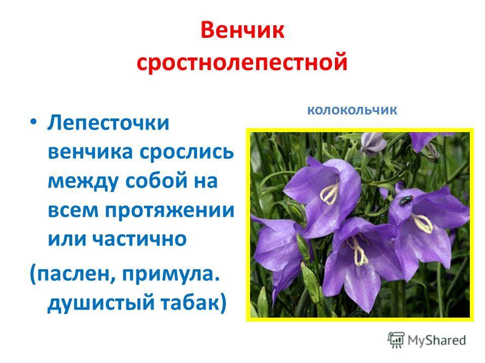 Главные функции венчика: 1. привлечение насекомых - опылителей 2. защита главных частей цветка