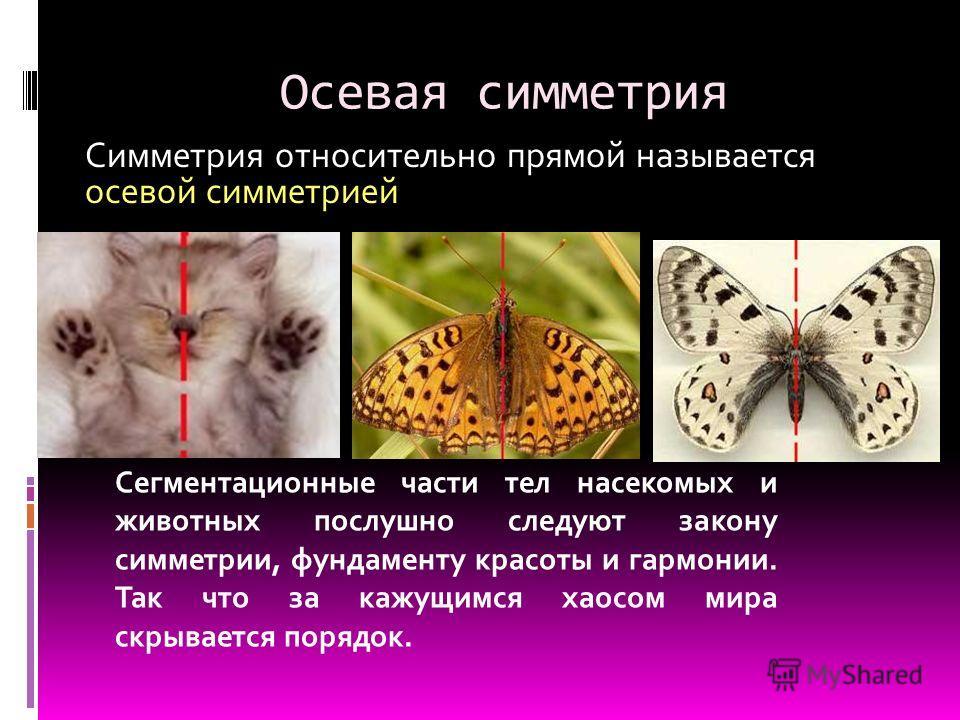 Осевая симметрия Сегментационные части тел насекомых и животных послушно следуют закону симметрии, фундаменту красоты и гармонии. Так что за кажущимся хаосом мира скрывается порядок. Симметрия относительно прямой называется осевой симметрией