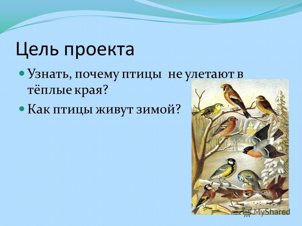 Цель проекта Узнать, почему птицы не улетают в тёплые края? Как птицы живут зимой?