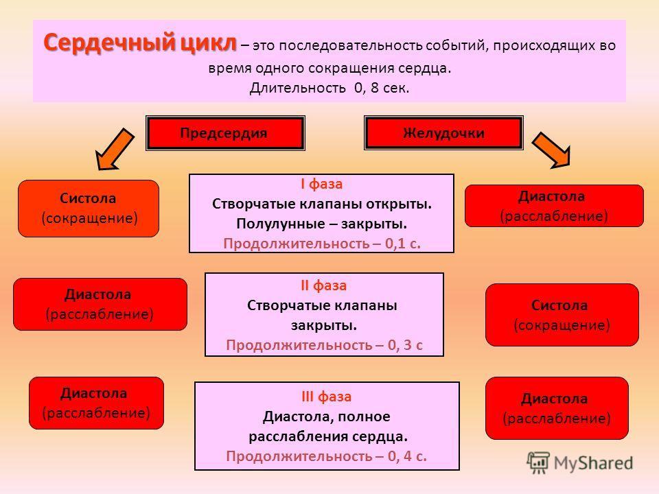 Сердечный цикл Сердечный цикл – это последовательность событий, происходящих во время одного сокращения сердца. Длительность 0, 8 сек. Предсердия Желудочки II фаза Створчатые клапаны закрыты. Продолжительность – 0, 3 с I фаза Створчатые клапаны откры