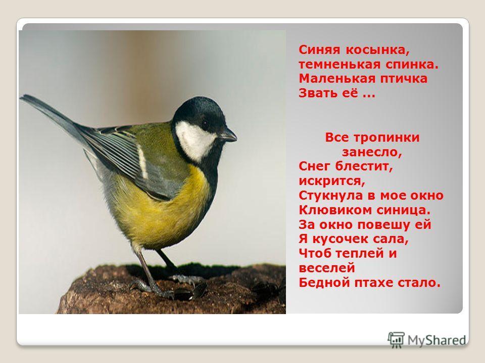 Синяя косынка, темненькая спинка. Маленькая птичка Звать её... Все тропинки занесло, Снег блестит, искрится, Стукнула в мое окно Клювиком синица. За окно повешу ей Я кусочек сала, Чтоб теплей и веселей Бедной птахе стало.