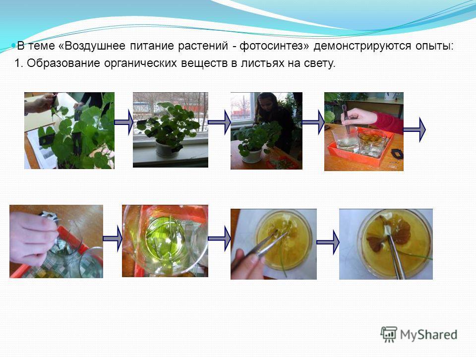 В теме «Воздушнее питание растений - фотосинтез» демонстрируются опыты: 1. Образование органических веществ в листьях на свету.