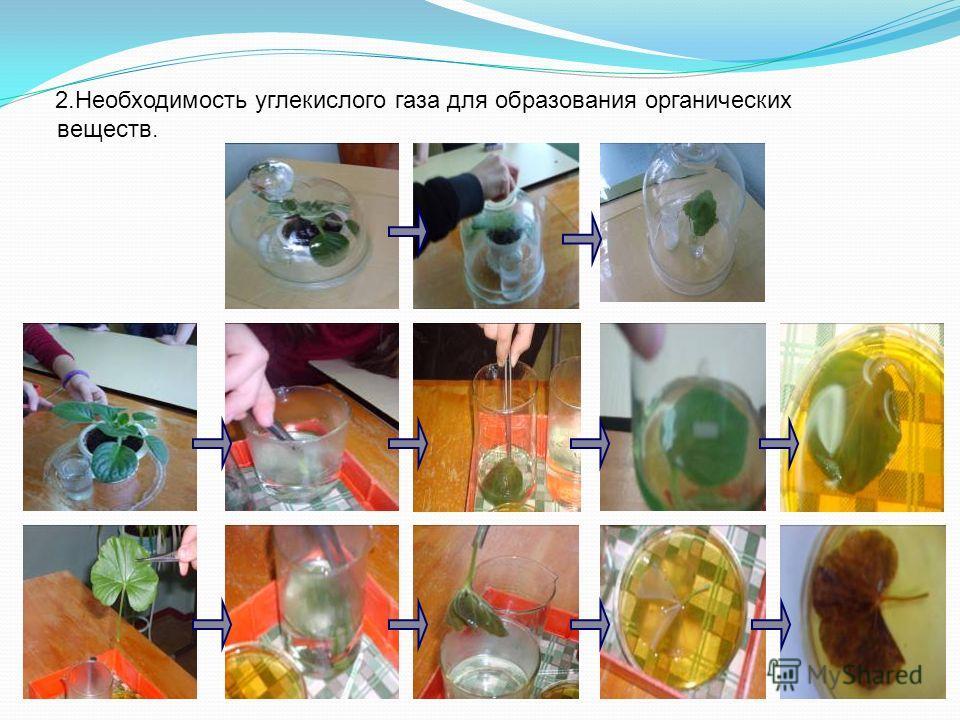2.Необходимость углекислого газа для образования органических веществ.