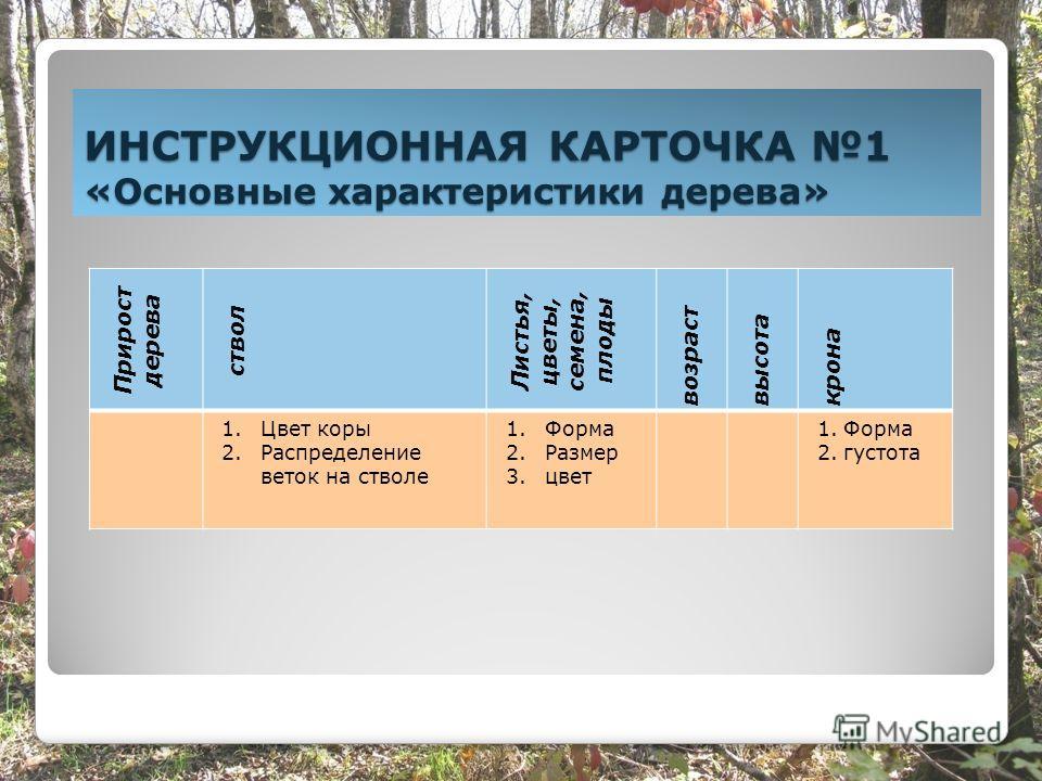 ИНСТРУКЦИОННАЯ КАРТОЧКА 1 «Основные характеристики дерева» Прирост дерева ствол Листья, цветы, семена, плоды возраст высота крона 1.Цвет коры 2.Распределение веток на стволе 1.Форма 2.Размер 3.цвет 1.Форма 2.густота