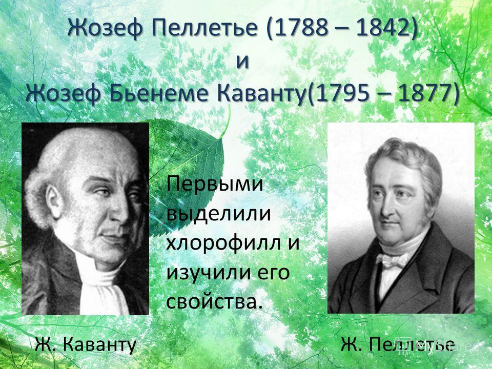 Жозеф Пеллетье (1788 – 1842) и Жозеф Бьенеме Каванту(1795 – 1877) Ж. КавантуЖ. Пеллетье Первыми выделили хлорофилл и изучили его свойства.