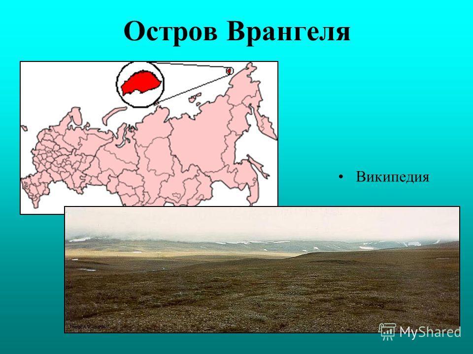 Остров Врангеля Википедия