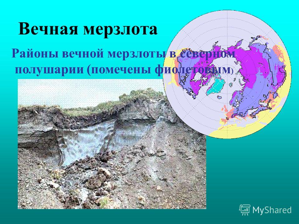 Вечная мерзлота Районы вечной мерзлоты в северном полушарии (помечены фиолетовым )