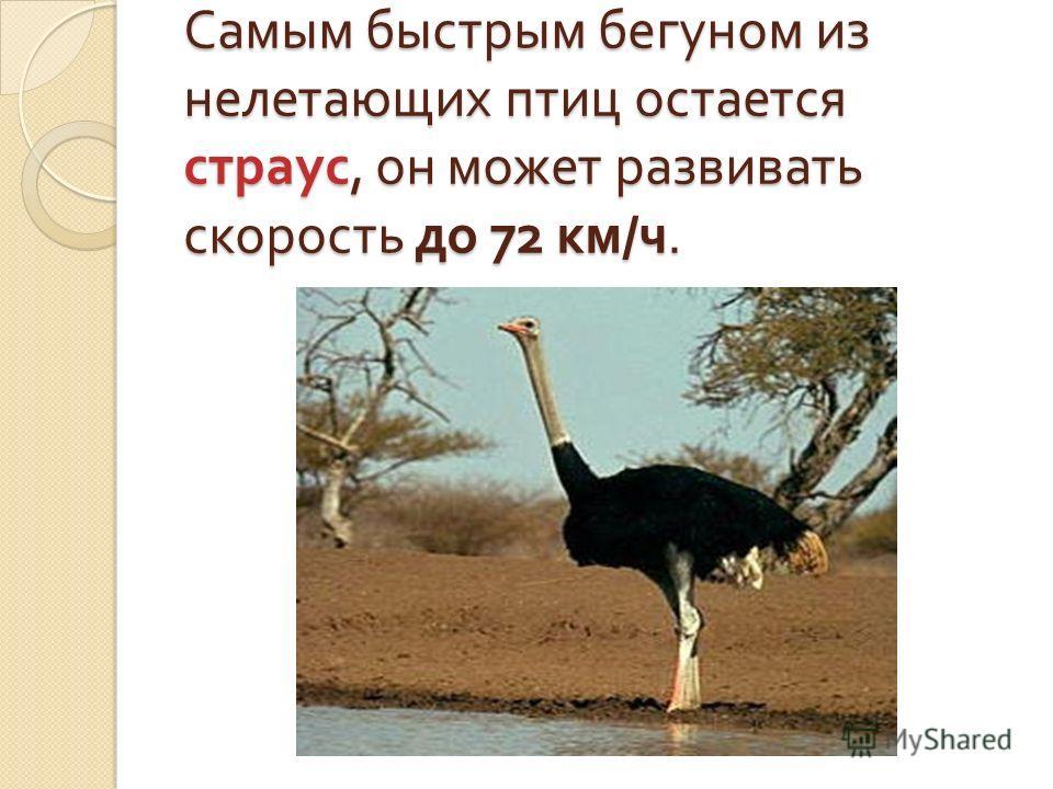 Самая тяжелая из летающих птиц является африканская дрофа. Ее вес составляет около 19 килограммов.