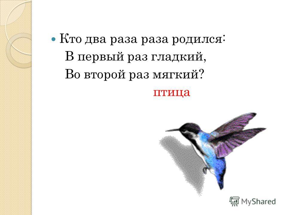 Страница 1 Загадки про птиц