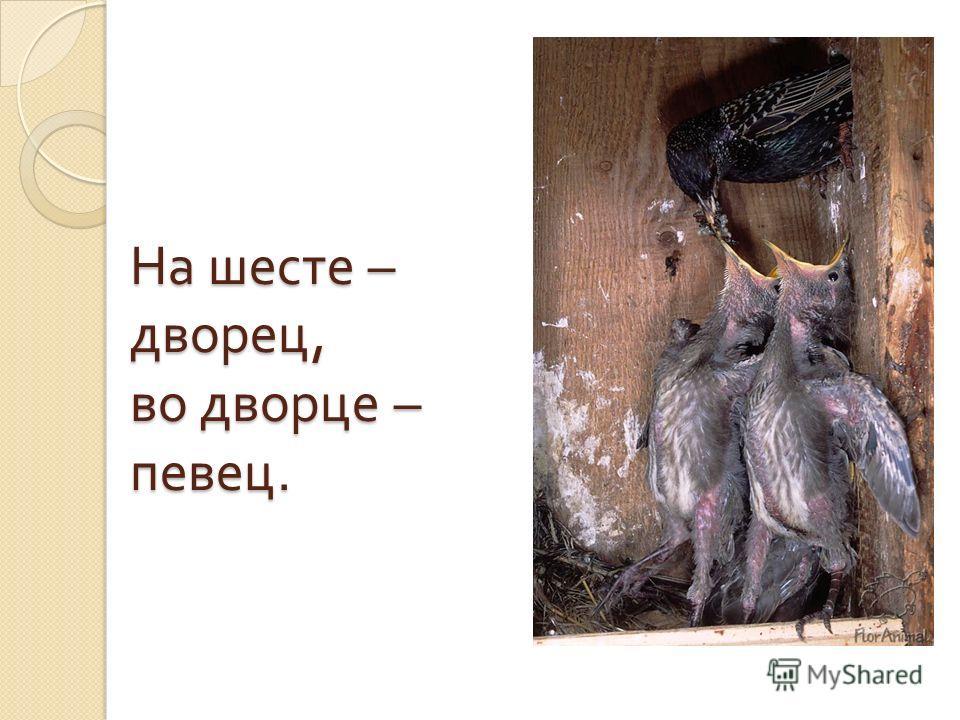 Всю ночь летает – Мышей добывает, А станет светло – Спать летит в дупло.