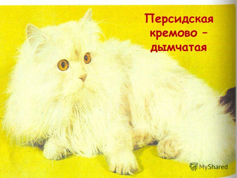 Породы кошек Длинношерстные К длинношерстным кошкам относятся персидские и персидские колор – пойнт. Персидские кошки Длинная,мягкая шерсть образует пышный воротник. Тело приземистое, спина, плечи и грудь мускулистые. Ноги короткие. Хвост короткий, к