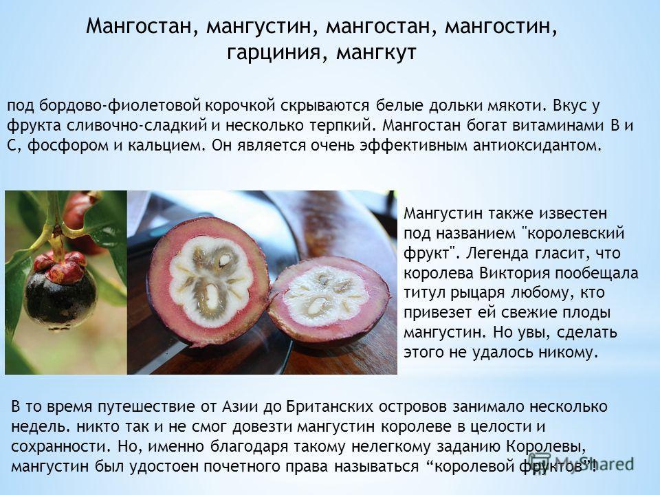 Мангостан, мангустин, мангостан, мангостин, гарциния, мангкут под бордово-фиолетовой корочкой скрываются белые дольки мякоти. Вкус у фрукта сливочно-сладкий и несколько терпкий. Мангостан богат витаминами В и С, фосфором и кальцием. Он является очень