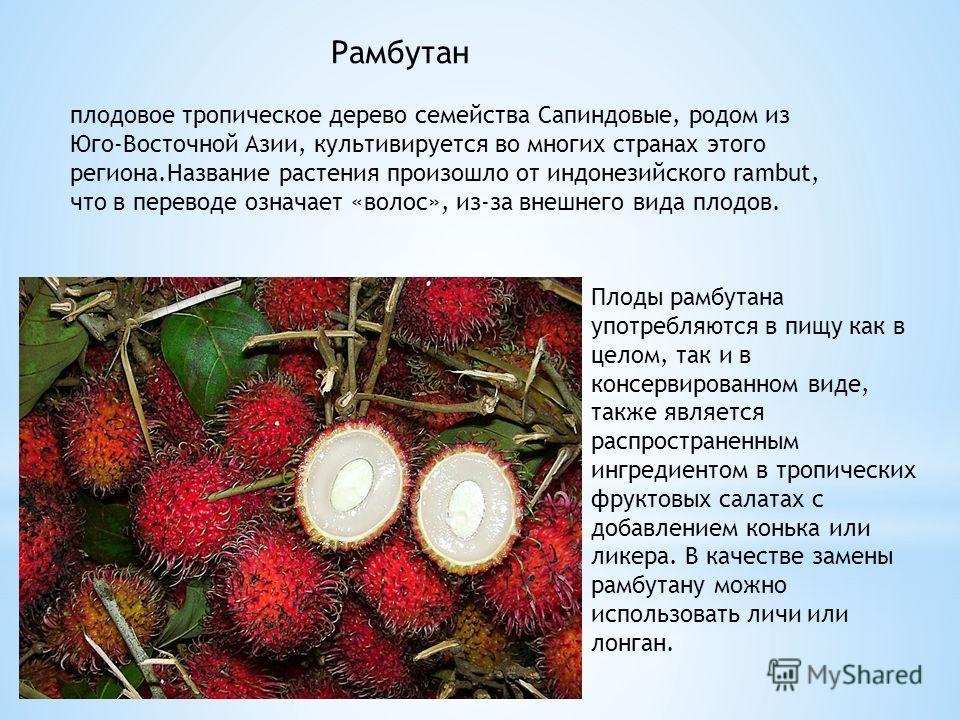 Рамбутан плодовое тропическое дерево семейства Сапиндовые, родом из Юго-Восточной Азии, культивируется во многих странах этого региона.Название растения произошло от индонезийского rambut, что в переводе означает «волос», из-за внешнего вида плодов.