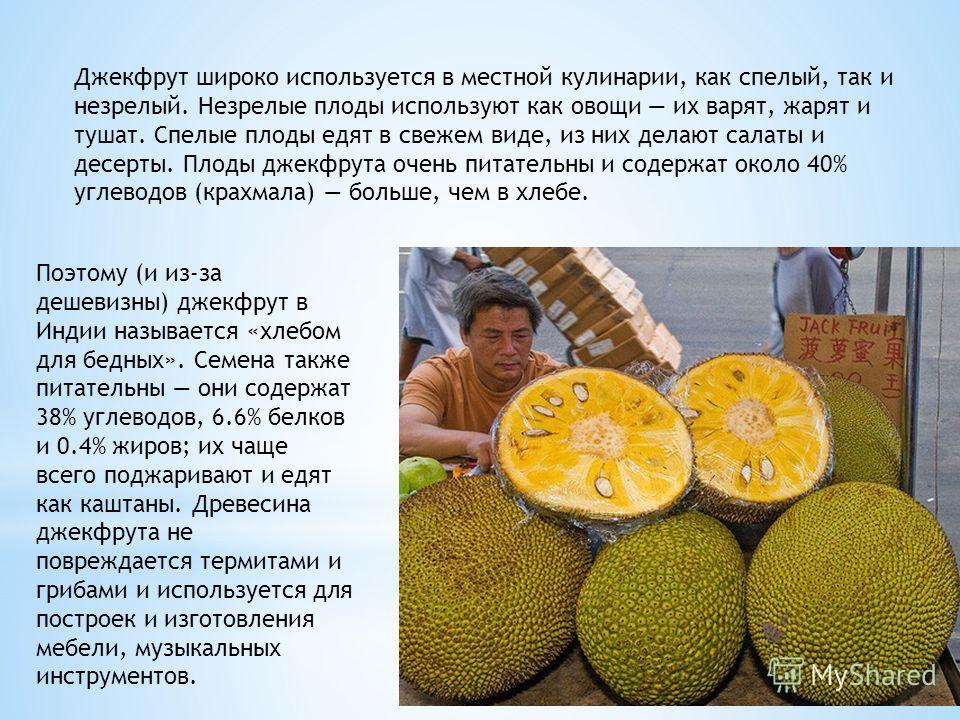 Поэтому (и из-за дешевизны) джекфрут в Индии называется «хлебом для бедных». Семена также питательны они содержат 38% углеводов, 6.6% белков и 0.4% жиров; их чаще всего поджаривают и едят как каштаны. Древесина джекфрута не повреждается термитами и г