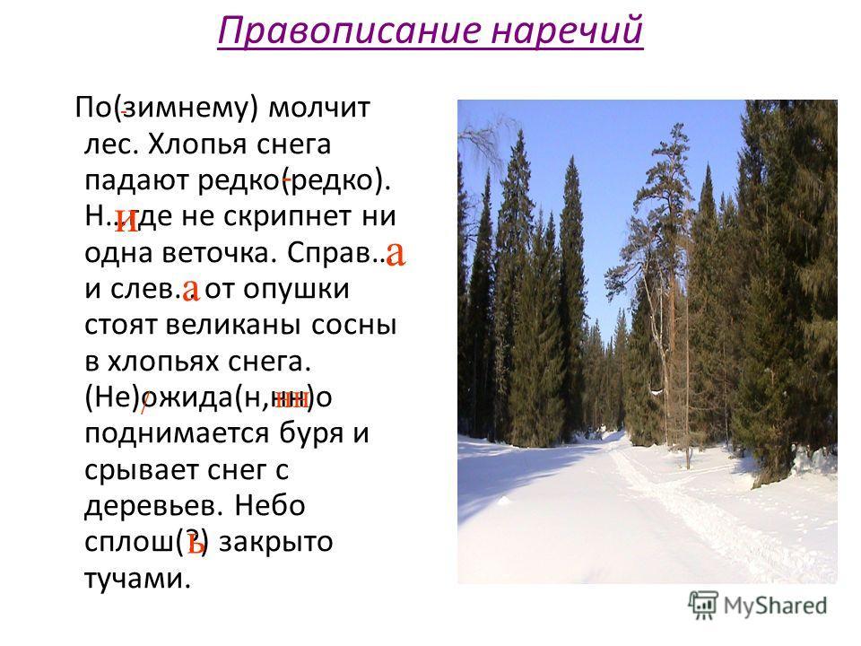 Правописание наречий По(зимнему) молчит лес. Хлопья снега падают редко(редко). Н…где не скрипнет ни одна веточка. Справ… и слев… от опушки стоят великаны сосны в хлопьях снега. (Не)ожида(н,нн)о поднимается буря и срывает снег с деревьев. Небо сплош(?
