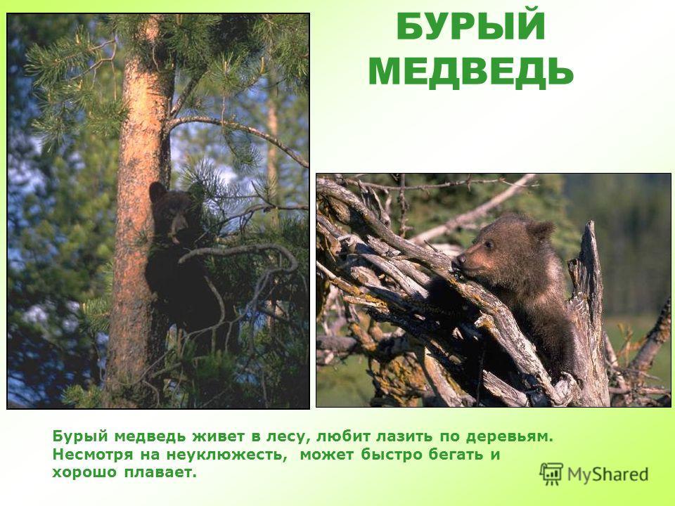 ДИКИЕ ЖИВОТНЫЕ ДИКИЕ ЖИВОТНЫЕ «Жители леса» часть 1 Виктория Кузнецова Детская Электронная Книга