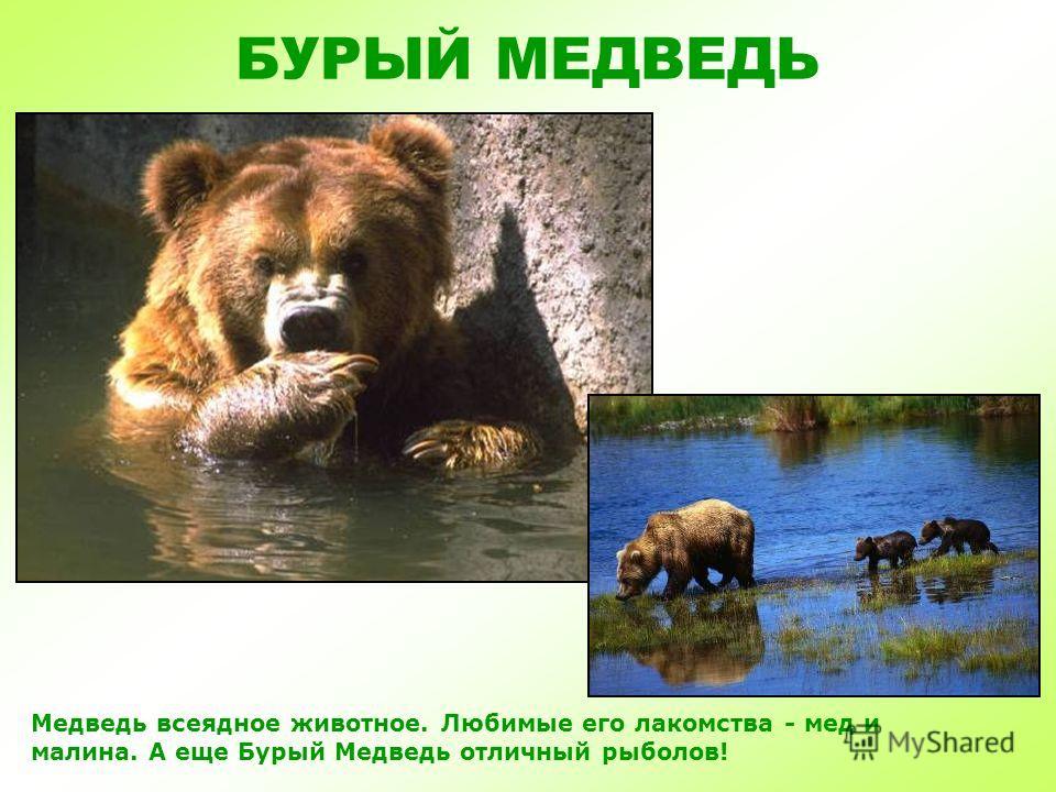 Презентация животные детская