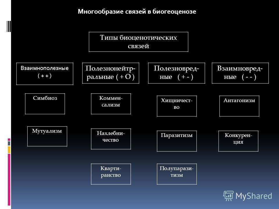 Типы биоценотических связей Многообразие связей в биогеоценозе Взаимнополезные ( + + ) Полезнонейтр- ральные ( + О ) Полезновред- ные ( + - ) Взаимновред- ные ( - - ) Симбиоз Кварти- ранство Нахлебни- чество Коммен- сализм Полупарази- тизм Паразитизм