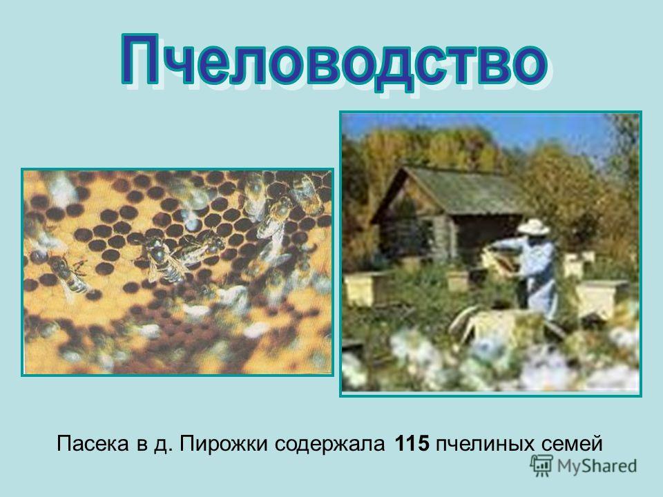 Пасека в д. Пирожки содержала 115 пчелиных семей