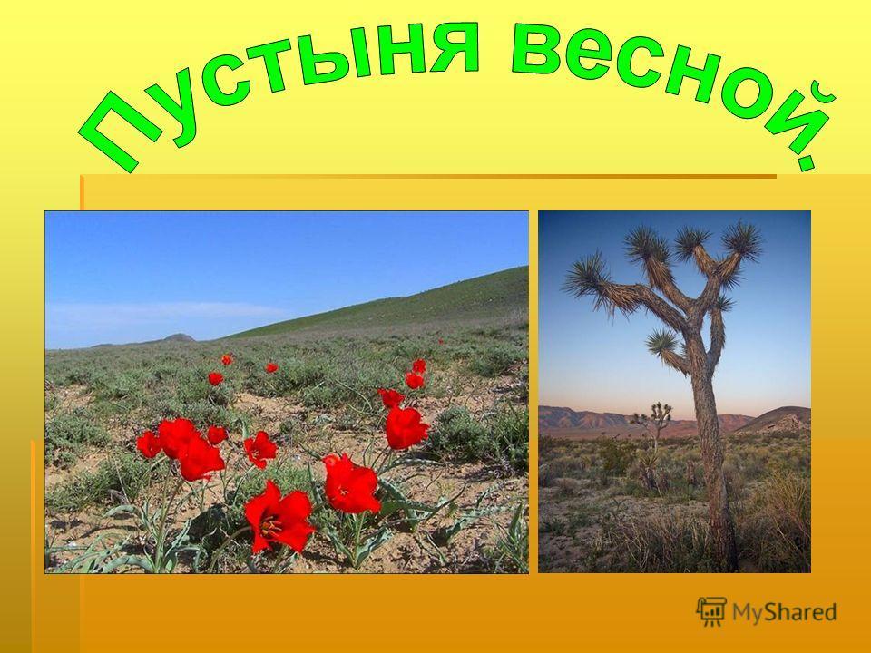 перекати-поле Перекати́-по́ле под этим именем известны особые образования, состоящие из отмерших и высохших растений и катающиеся по ветру, в виде иногда довольно больших шаров, рассеивая семена. Начало таким образованиям дают весьма разнообразные ра