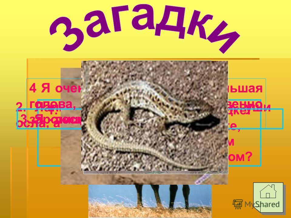 Каракум Кызылкум Средняя Азия