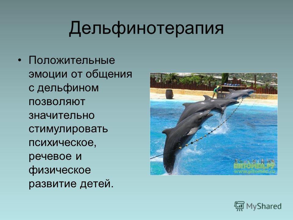 Дельфинотерапия Положительные эмоции от общения с дельфином позволяют значительно стимулировать психическое, речевое и физическое развитие детей.