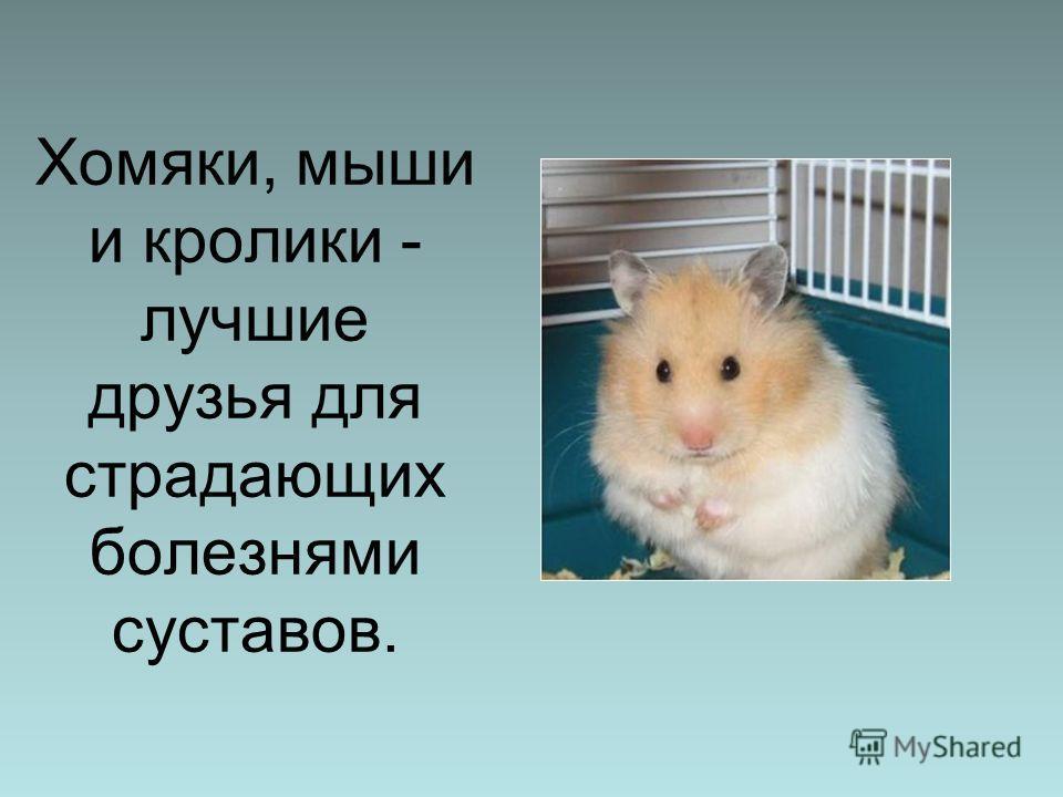 Хомяки, мыши и кролики - лучшие друзья для страдающих болезнями суставов.