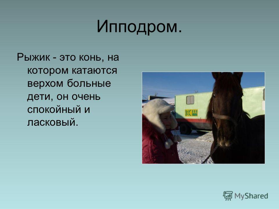 Ипподром. Рыжик - это конь, на котором катаются верхом больные дети, он очень спокойный и ласковый.