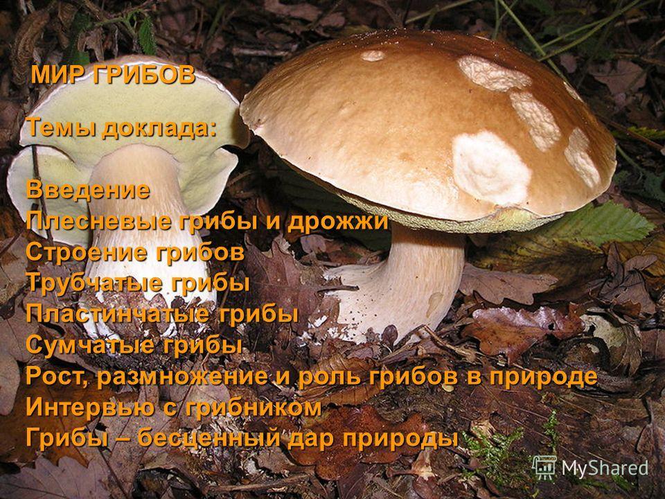 Темы доклада: Введение Плесневые грибы и дрожжи Строение грибов Трубчатые грибы Пластинчатые грибы Сумчатые грибы Рост, размножение и роль грибов в природе Интервью с грибником Грибы – бесценный дар природы МИР ГРИБОВ