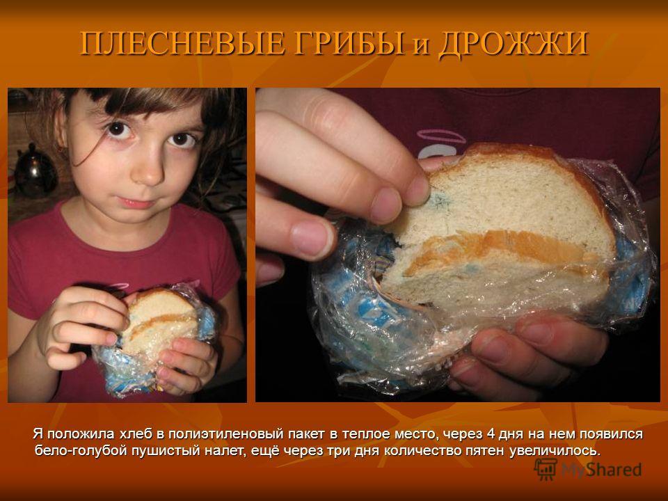 ПЛЕСНЕВЫЕ ГРИБЫ и ДРОЖЖИ Я положила хлеб в полиэтиленовый пакет в теплое место, через 4 дня на нем появился бело-голубой пушистый налет, ещё через три дня количество пятен увеличилось.