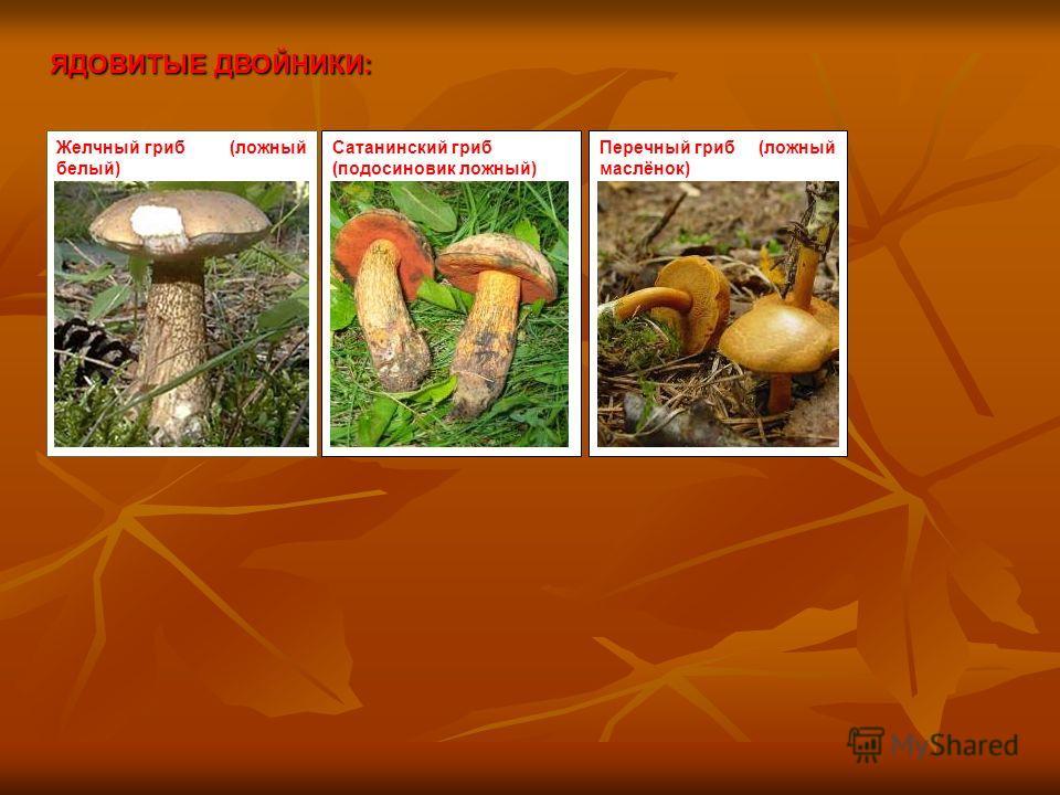 ЯДОВИТЫЕ ДВОЙНИКИ: Желчный гриб (ложный белый) Сатанинский гриб (подосиновик ложный) Перечный гриб (ложный маслёнок)