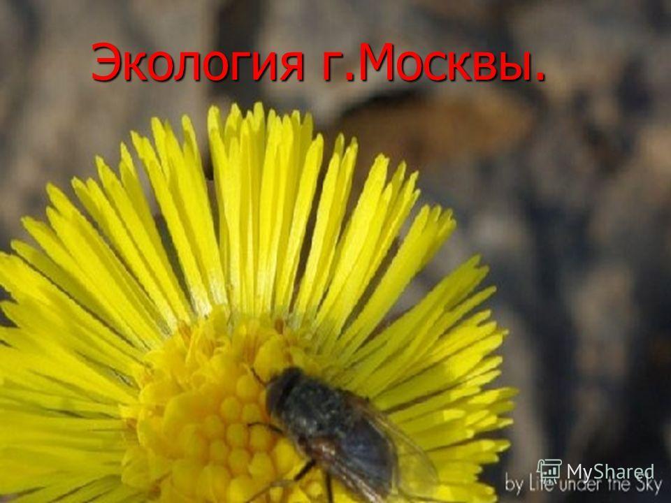 Экология г.Москвы.