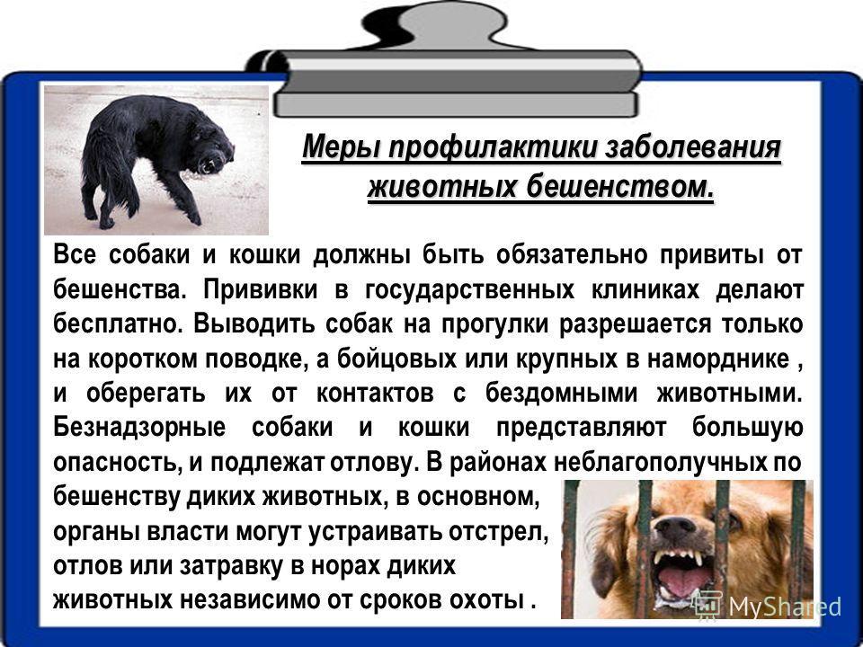 Все собаки и кошки должны быть обязательно привиты от бешенства. Прививки в государственных клиниках делают бесплатно. Выводить собак на прогулки разрешается только на коротком поводке, а бойцовых или крупных в наморднике, и оберегать их от контактов